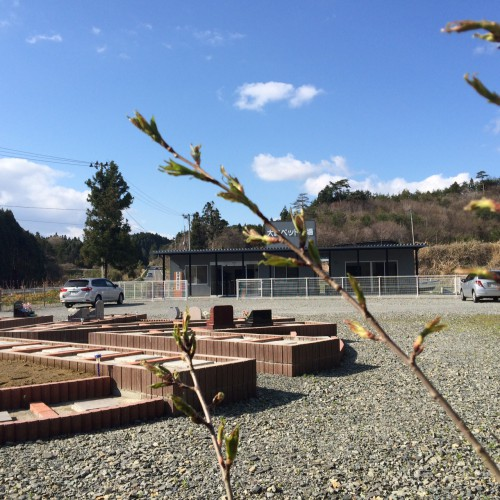 桜の季節、4月の回忌供養